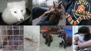 Gekon, lis polarny, sowa uszatka... Strażnicy zajmują się też zwierzętami