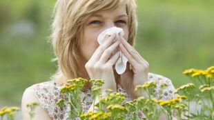 Wiosna i lato – piękny, ale i trudny czas zarówno dla pracujących,  jak i odpoczywających alergików