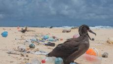 Zwierzęta giną od śmieci (Matthew Chauvin)