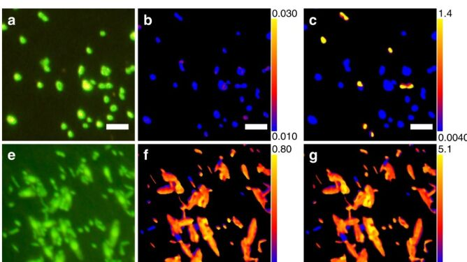 Naukowcy ożywili mikroorganizmy sprzed ponad 100 milionów lat