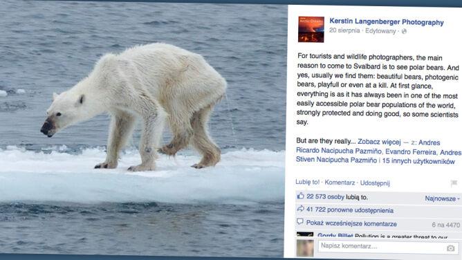 Niedźwiedź polarny wychudzony do kości. Ofiara zmiany klimatu