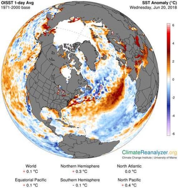 Odchylenia od średniej temperatury wody (NOAA/University of Mine)