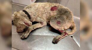 Ranny w pożarze na Sardynii pies
