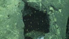 Naukowcy widzieli przebłyski pojedynczych macek