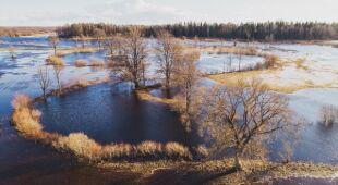 Park Narodowy Soomaa (fot.: Shutterstock | wideo bez dźwięku)