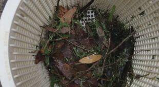 Pająki zagrażają Australii