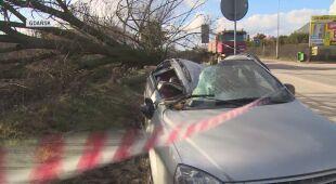Wiatr w Gdańsku powalił drzewo na samochód